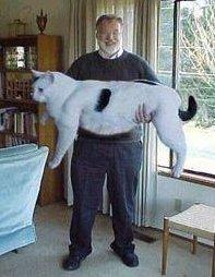 Grote kat 2