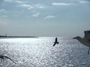 Den Helder Texelse boot