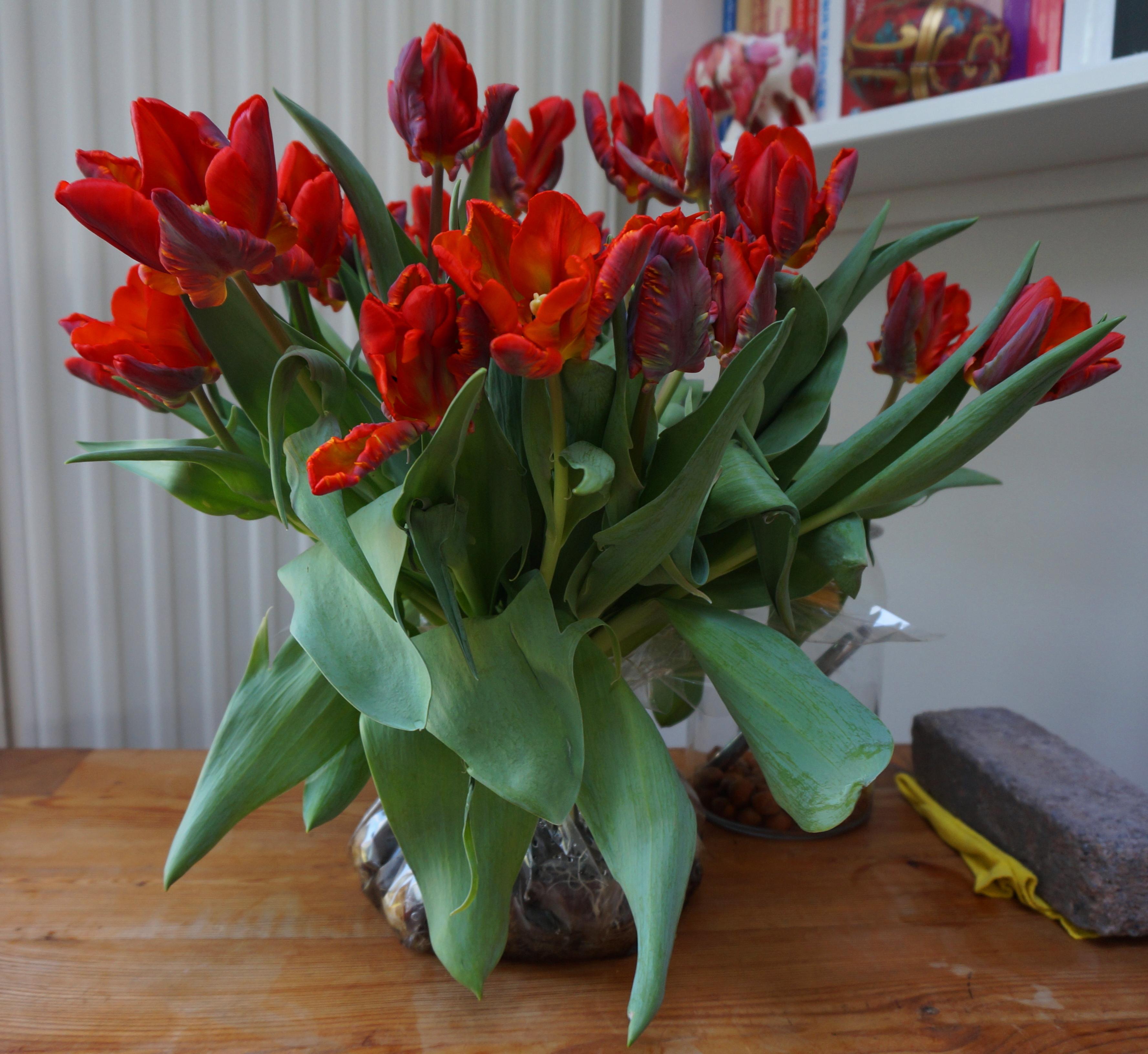 Tulpen met bol  u2013 henk 50