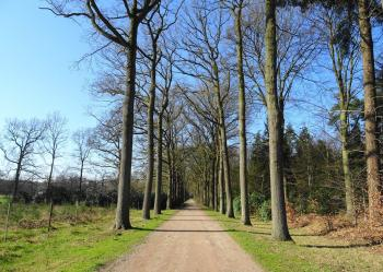 Wouwse Plantage bos