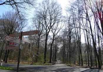 Reichswald bij Kleve