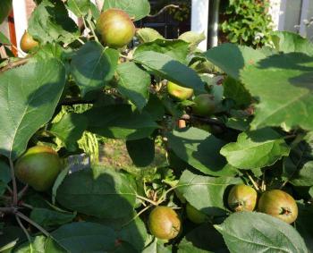 Appels 2
