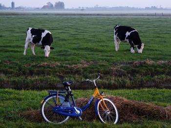 koeien-swichum