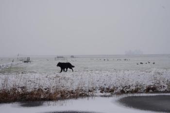 midden-delfland-sneeuw