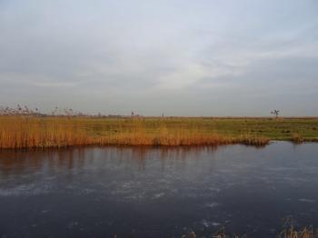 polder-bij-wormer