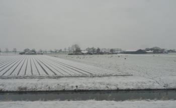 sneeuw-bij-waarland